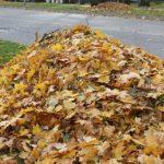 Екологи нагадують про шкоду диму від спаленого листя