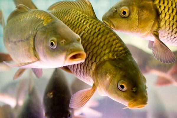 риба, риболовство, Дніпро