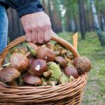 У 2018 році в обасті грибами отруїлися 7 людей