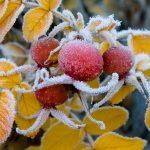 На Дніпропетровщині очікуються заморозки