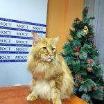 Днепровского кота внесли в Книгу рекордов Украины