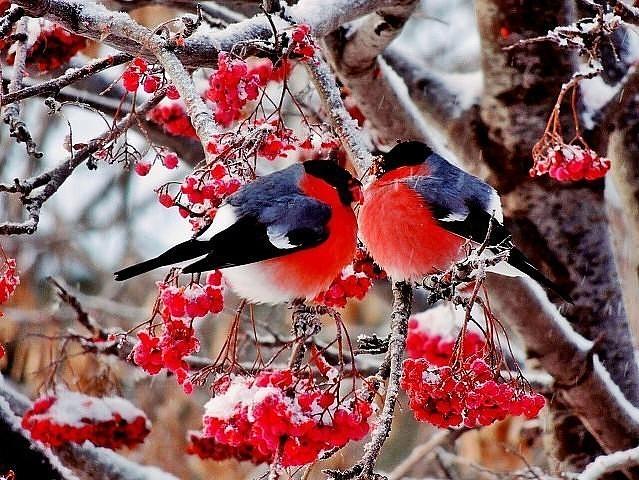 птахи, сніг, Україна