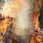 За вогнище з опалого листя господарів очікує штраф