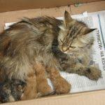 В Днепре спасатели помогли кошке с котятами