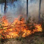 В області оголошено найвищий рівень пожежної небезпеки