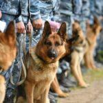 Молодіжний парк Дніпра запрошує на виступ собак-рятувальників