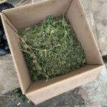 На Дніпропетровщині під час обшуків поліцейські вилучили наркотики